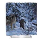 Wolf Wonderland Shower Curtain