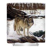 Wolfe In Winter Snow Shower Curtain