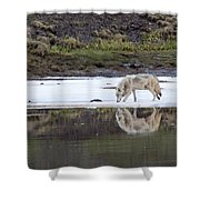 Wolflection Shower Curtain