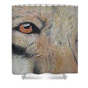 Wolf's Gaze Shower Curtain