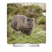 Wombat Tasmania #1 Shower Curtain