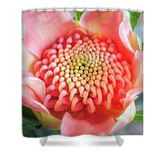 Wonderful Bright Pink Waratah Bud Shower Curtain