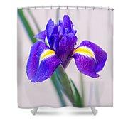 Wonderful Iris With Dew Shower Curtain