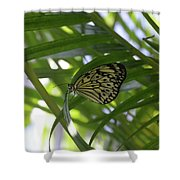 Wonderful Look At A Tree Nymph Butterfly In Foliage Shower Curtain