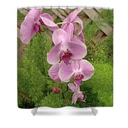 Wonderful Orchid Shower Curtain