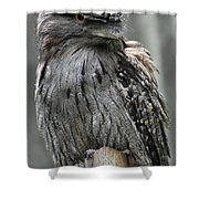 Wonderful Patterned Feathers On A Tawny Frogmouth Bird Shower Curtain