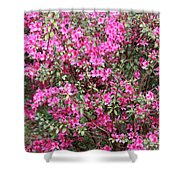 Wonderful Pink Azaleas Shower Curtain