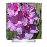 Wonderful Pink Gladiolus Shower Curtain