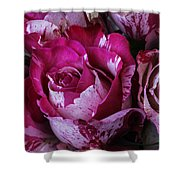 Wonderful Pink Red Rose Shower Curtain