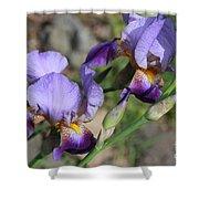 Wonderful Purple Irises Shower Curtain