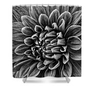 Wonderful Tones Dramantic Dahlia Shower Curtain