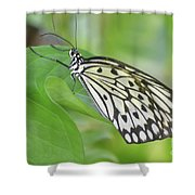 Wonderful Up Close Look At A Large Tree Nymph Butterfly Shower Curtain