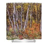 Wonderful Woods Wonderland Shower Curtain