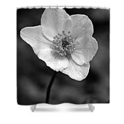 Wood Anemone 6 Shower Curtain