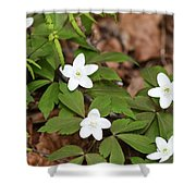 Wood Anemone Blooming Shower Curtain