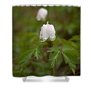Wood Anemone Heavy From The Rain Shower Curtain