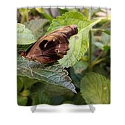 Wood Butterfly Shower Curtain