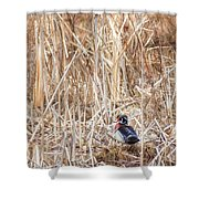 Wood Duck Drake 2 Shower Curtain