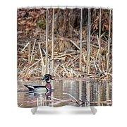 Wood Duck Drake 2018 Shower Curtain