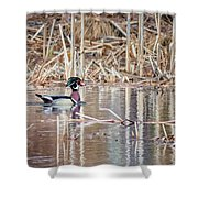 Wood Duck Drake 2018 Square Shower Curtain