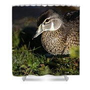 Wood Duck Female Shower Curtain