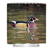 Wood Duck In A Pond Shower Curtain