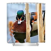 Wood Duck In The Reeds Shower Curtain