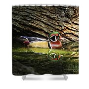 Wood Duck In Wood Shower Curtain