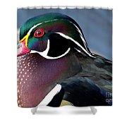Wood Duck On The Delaware - 27fullsizerender Shower Curtain