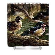 Wood Ducks Posing On A Log Shower Curtain