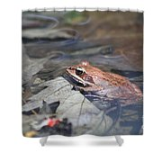 Wood Frog  Shower Curtain