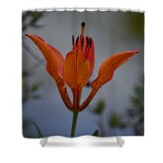Wood Lily With Lake Superior In Background Shower Curtain