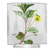 Wood Loosestrife Shower Curtain