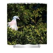 Wood Pigeon Shower Curtain