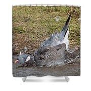 Wood Pigeon Washing Shower Curtain