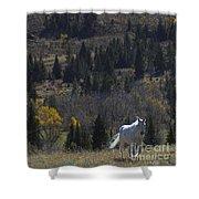 Wood River White Stallion-signed-#1839 Shower Curtain
