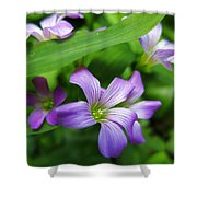 Wood Sorrel Shower Curtain