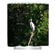 Wood Stork-out On A Limb Shower Curtain