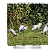 Wood Storks 2 - There Is Always One In A Crowd Shower Curtain