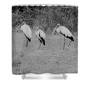 Wood Storks By The Water's Edge Shower Curtain