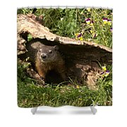 Woodchuck Ready For Spring Shower Curtain