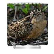 Woodcock At Rest Shower Curtain