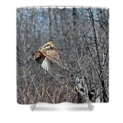 Woodcock Flight Ascension Shower Curtain