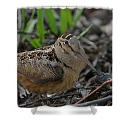 Woodcock In The Woods Shower Curtain