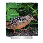 Woodcock Shower Curtain