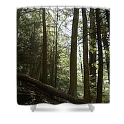 Wooded Serenity Shower Curtain