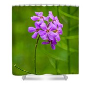 Woodland Dreaming Shower Curtain