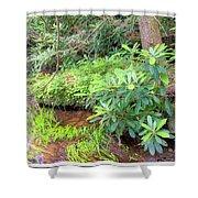 Woodland Stream Forest Interior Shower Curtain