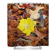 Woodland Surprise Shower Curtain