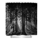 Woodland Walks Silver Rays B/w Shower Curtain
